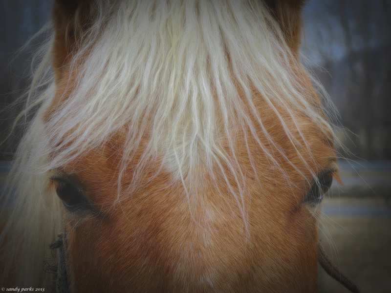 3-1-14- Horse, up close and personal