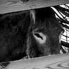 7-14-15: Donkey eyes
