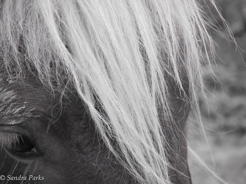 12-21-15: eye of the pony