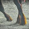 6-30-15: Friesian feet