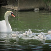 5-4-14- Not ugly ducklings at all