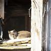 1-24-15: Cat in the sun