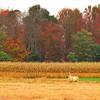10-12-14: Llama. on Timber RIdge