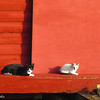 7-27-16: Two cats