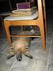 The cat has no shame.