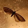 Moth on a porch light, Tucson.