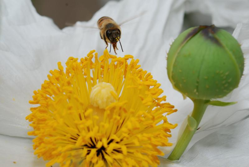 bee + flower = photo gold!