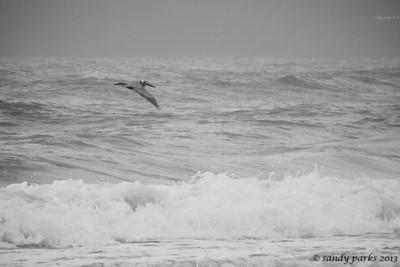 Pelican, not heron