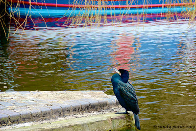 unidentified bird, Camden Lock