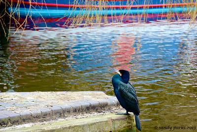 unidentified bird, Camden Lock