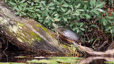 Turtle waxed