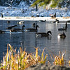 Geese on a chilly December morning. <br /> Manual Olympus Zuiko 65-200 on the E-300.