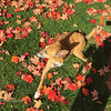 Leaves and Dog