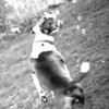 """""""Crush chasing bubbles""""...My 1st. shoot with a Pitbull. Series #1"""