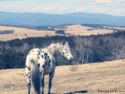 2-24-13: My favorite spotted horse (sorry, Donald)