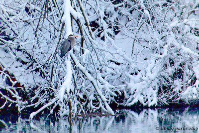 3-25-13: The heron, on a snowy morning