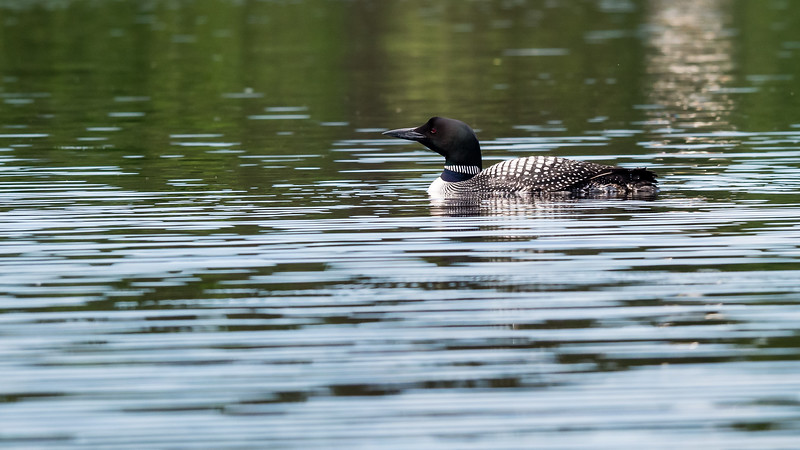 Loon of the Spirit
