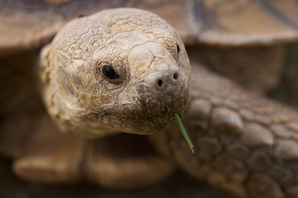 Tortoise with a smoke