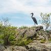 Hot heron