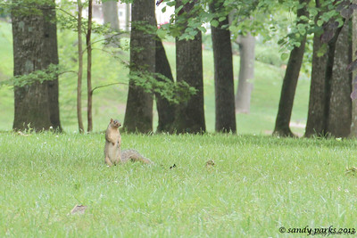 5-22-12- Squirrel! (now what was I saying?)