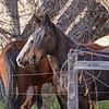 DSC_1354mc_Horses