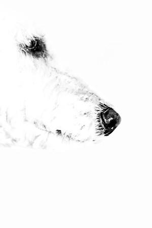 Hi-Key Dog Nose