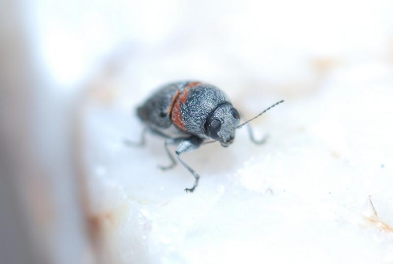Funny looking bug in Tucson, AZ.