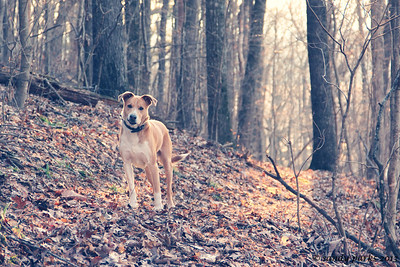 2-25-13: Max, in the forest
