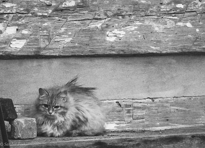 1-11-16: Cat in the rain