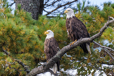 Wisconsin eagles