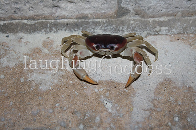 Crab chilling on a step, near the beach. I snapped a few photos and was settling in to get some action shots when a few fellas came bounding down the staircase and spooked the little guy. Can't say I blame him, getting squished wouldn't be my idea of a fun night, either.