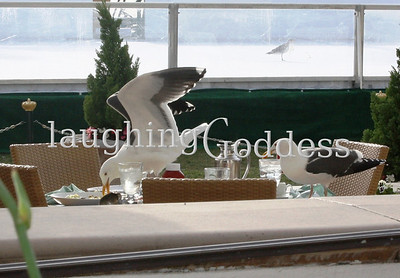 I was having a casual lunch when these two dropped in for a bite. Quite a few photos from this series are blurry because I was laughing too hard to hold the camera steady.