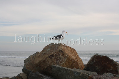 A proud seagull surveys the Coronado Coast. Perhaps, even, following a feast at The Del.