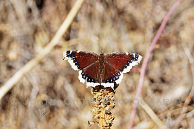 Moth. Lair 'o the Bear Open Space, CO