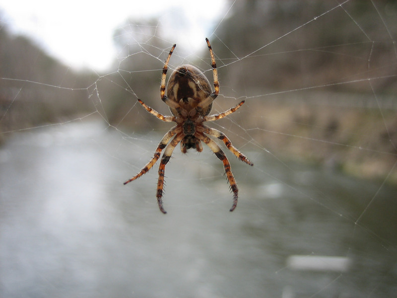 Cool spider on a bridge in Tennessee. It was cool because there was a spider like this every few feet with its own web.