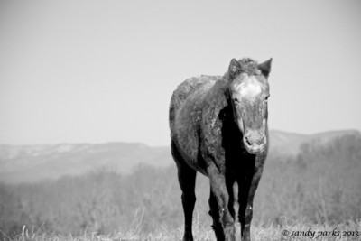 1-4-12: Muddy Horse, Thistle Ridge