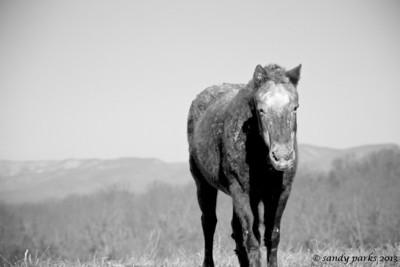 1-4-12: Muddy Horse, Thistle Ridge