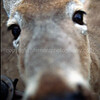"""Nosey Doe""...Here is lookin @ U *-)"