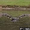 Cumbrian Lakes Wildlife (Photographer: Nigel Worrall)