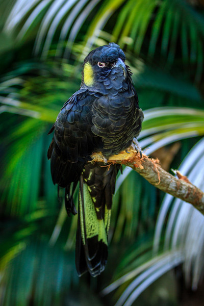Currumbin, QLD, Australia<br /> Currumbin Sanctuary, Queensland
