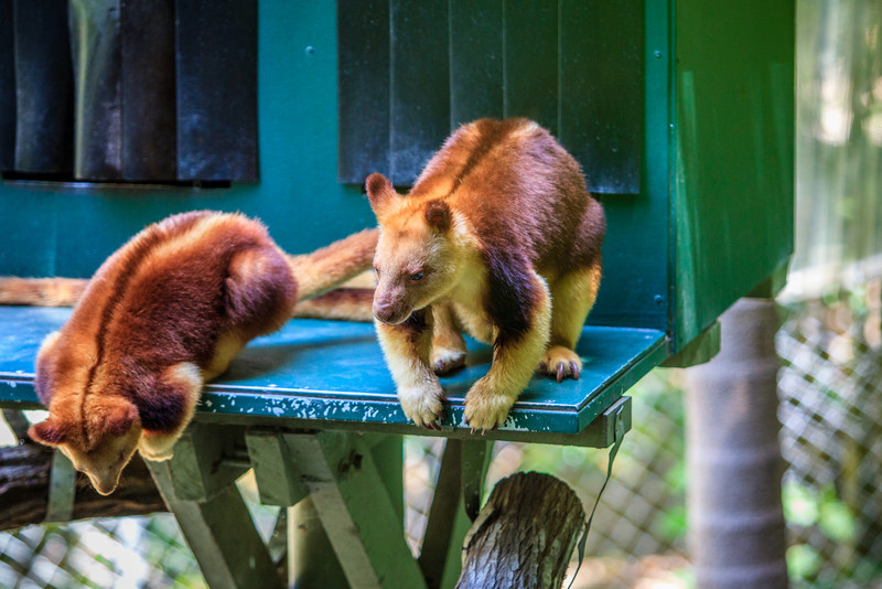 Currumbin, QLD, Australia<br /> Currumbin Wildlife Sanctuary on the Gold Coast. Created by beekeeper and conservationist Dr Alex Griffiths, and opened (as the Currumbin Bird Sanctuary) in 1947.