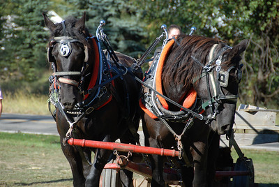 Hayride horses at Jenny's Farm Market, Dexter, Michigan, USA.