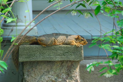 Friendly Squirrel in Chelsea, MI.