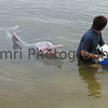 Pink Dolphin - Sentosa - Singapore