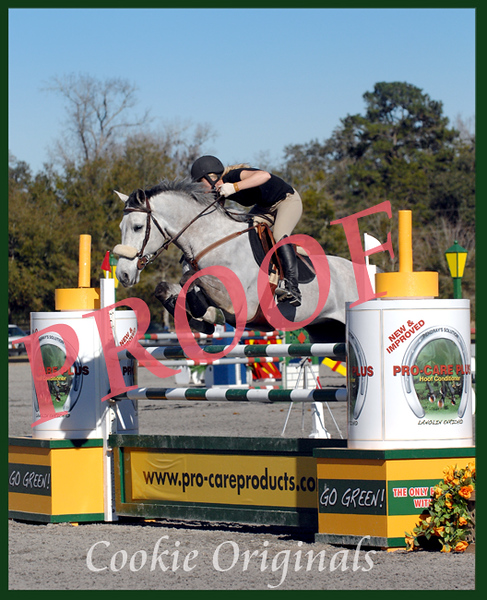 Grey horse jumping Procare plus jump and HITS ocala 2010<br /> NOT model released