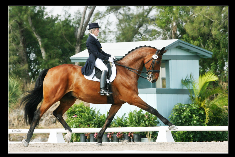 Carol Lavell riding Much Ado   Prix ST George USEF HP qualifying