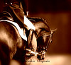 DressageART4099W1copper