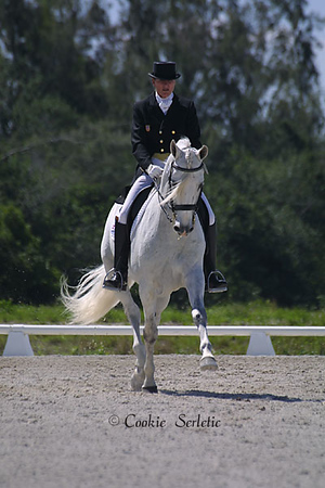 dressageTrotgrey3404