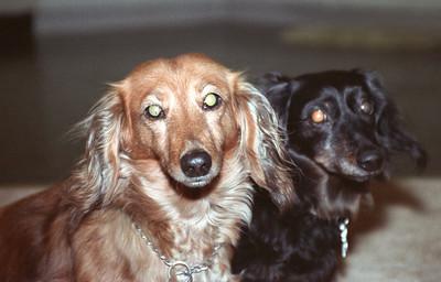 1990-9-10-twodogs