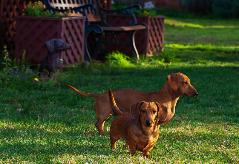 Maggie and Pete.   2/4/10